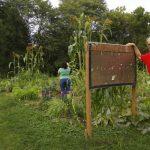 The Way We Eat: Madison's Community Gardens