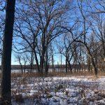 Madison Thinning Deer Population