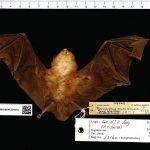 Wildlife Trade Exacerbates Viral Species Jumping
