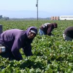 The Vital and Vulnerable Work of Latinx Laborers