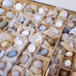 Photo of a crate of eggs nestled in cotton batting with hand-penciled labels