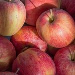 Apple picking in a pandemic