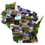 Snapshot Wisconsin tracks Wisconsin's widlife