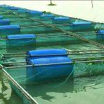 Status of Trump's streamlined industrial aquaculture permitting