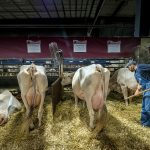 Dane County Proposes Contract Extension to Try and Keep 2021 World Dairy Expo in Madison
