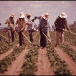 "Franks: ""Farmwork Modernization Act"" works against farm workers"