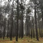 On Earth Day, a pledge to plant more trees