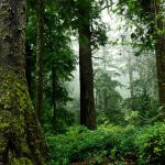 Budgeting the Value of Nature