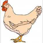 Never Trust a Chicken