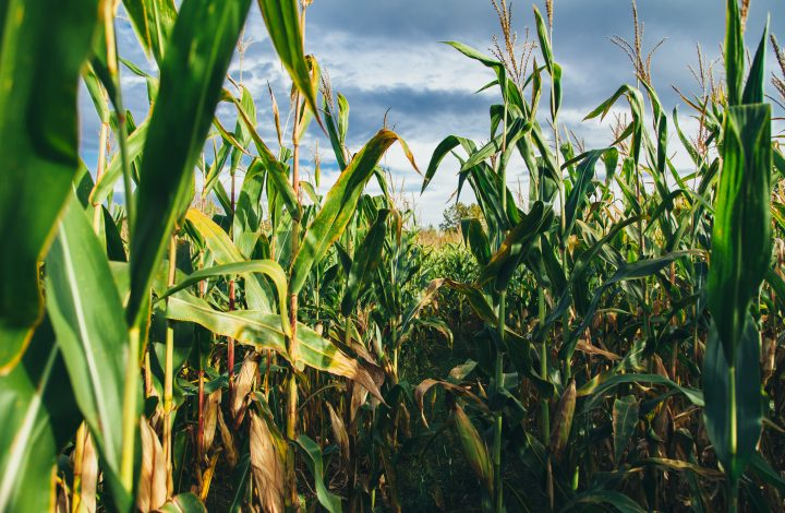 As drought conditions continue, southern Wisconsin farmers face uncertain financial future