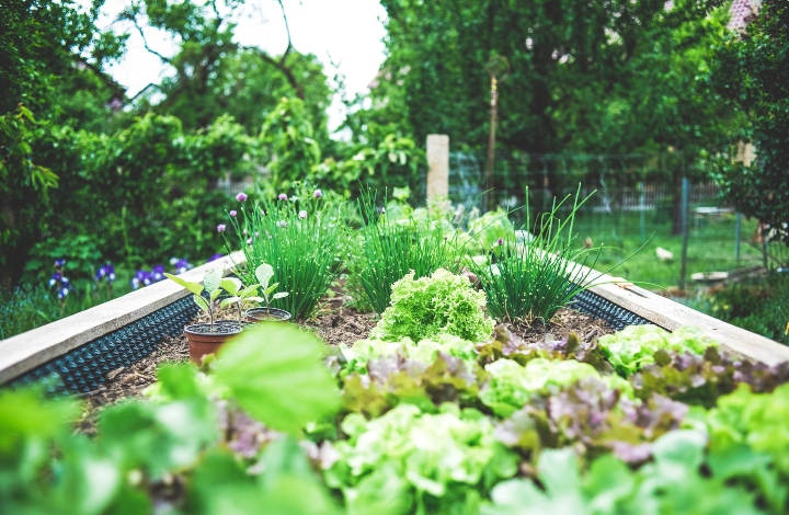 Gardening with Science!