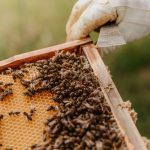 City of Madison Engineering Division Acquires Their First Ever Beehives