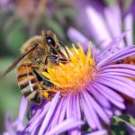 assaults on U. S. pollinators continue with devastating consequences