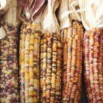 Indigenous Seeds and Food Sovereignty
