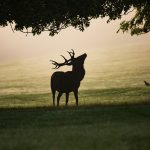 Running with the Bucks in Rhinelander