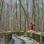 Save the birds, enjoy the birds: Madison Audubon